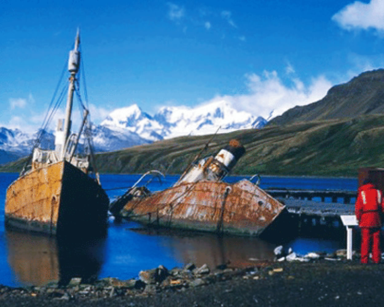 Viola Trawler Recovery